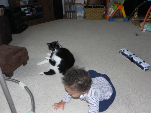 cat watching baby crawl