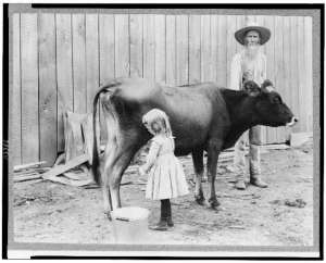 girl and cow