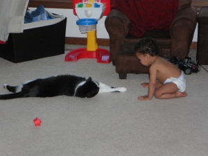 face-off with cat