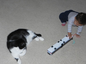 Playing with cat and bus