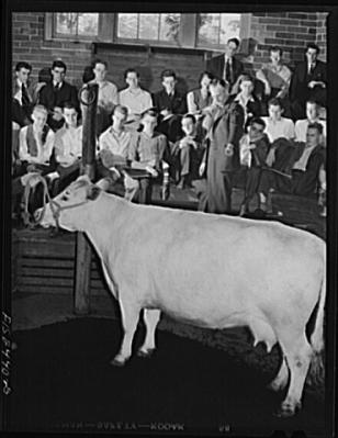 """Ladies and gentlemen of the jury, I submit to you that my client could not be guilty of the attempted murder of that boy as she is neither a Holstein nor a heifer."""